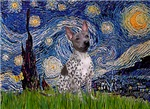 STARRY NIGHT<br> & American Hairless Terrier