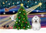 CHRISTMAS MAGIC<br>& Coton De Tulear