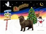 CHRISTMAS SIGNS<br>& Newfoundland