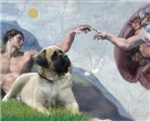 CREATION <br>& Bull Mastiff