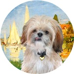 Shih Tzu (P)<br>Regatta (Sailboat