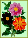 Colorful Vintage Flowers Print