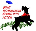 Giant Schnauzers Spring into Action