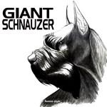 Head Study Giant Schnauzer