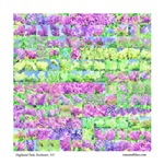 Collage of Pastel Lilacs from Highlank Park