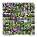 Collage of Lilac Photographs #34