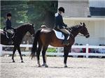 BEAUTIFUL HORSES™