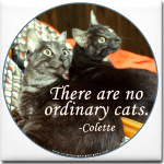No ordinary cats...