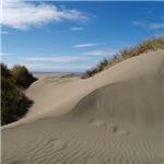 Pacific Dune Scene