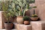 Adobe Desert Garden