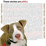 Pit Bulls Need Your Help