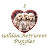 I Love Golden Retriever Puppies