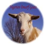 Lovin' the Goat Life
