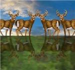 White Tail Deer Bucks