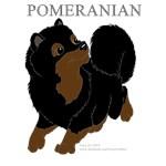 Pomeranian Colors