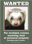 Ferret Wanted Poster