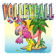 Flamingo, Volleyball