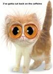 Caffeine Cat