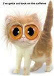 Caffeine Geek Cat