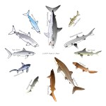 12 Shark Clocks