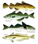 4 cod fishes