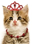 Princess Kitten Cards
