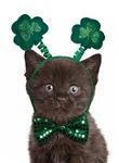 Shamrock Kitten Cards