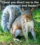 NEW Squirrel Bird