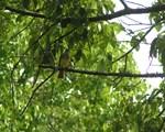 BAKCYARD BIRD