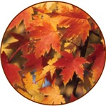 AUTUMN EQUINOX: CHANGING LEAVES