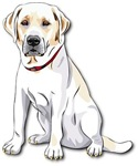 Labrador Retriever wOut Text