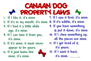 Canaan Dog Property Laws 2