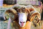 Kaleidescope Ram