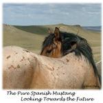 Roan Spanish Mustang Stallion