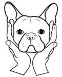 French Bulldog Head in Hands