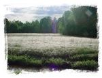 Dewy Dawn