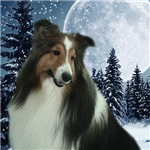 Winter Moon Sheltie