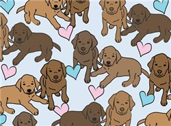 Chocolate Labs Pattern