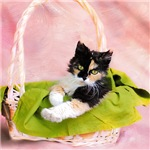 Calico Kitty in Basket