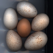 Beauty of an egg