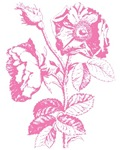 Pink Rose Illustration T-shirts