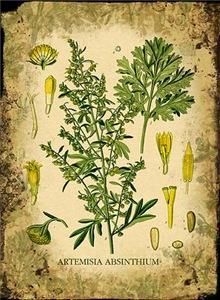 Absinthe Botanical Illustration