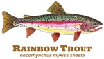 RAINBOW Trout Species