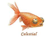 Celestial Eye