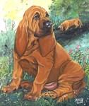 Bloodhound red