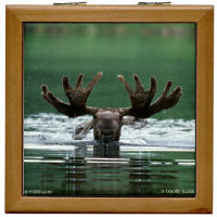 Moose Lover Gifts