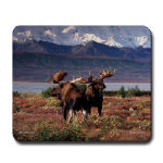 Moose Mugs and Mouse Pads