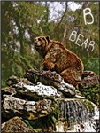 B is for Bears (Kodiak, Alaska)