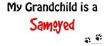 Samoyed Grandchild