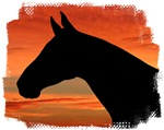Horse Sunset Portrait. Equestrian Clothing & Gifts
